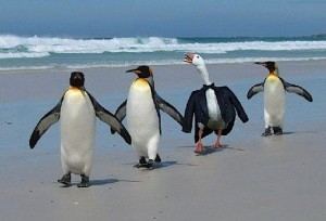 penguins-id-theft