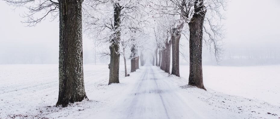 Snow covered road lined with trees